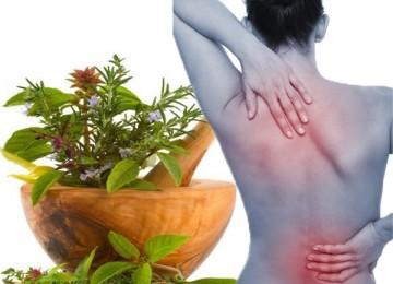 Народные средства в лечении остеохондроза